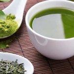 Chá verde: conheça os benefícios