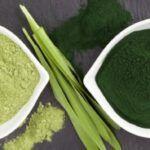 Spirulina e Chlorella: conheça os benefícios desses superalimentos