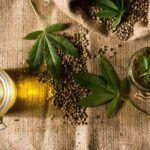 Semente de Maconha: conheça os benefícios das 'hemp seeds'