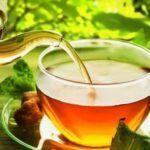 Espinheira santa: conheça os benefícios terapêuticos e medicinais desse chá
