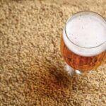 Maltes: entenda a diferença entre eles na produção de cerveja